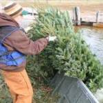 MDC Seeks Christmas Trees for Recycling as Fish Habitat
