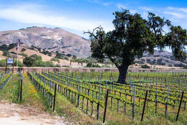 Seca Mesa Winery