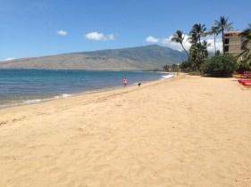 wind swept beach