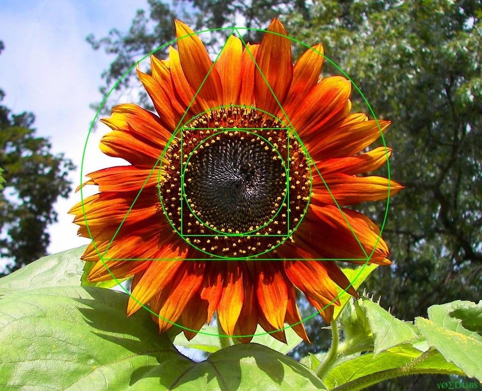 FLower orange geometry joe dubs