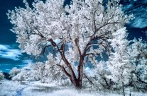 Enhanced Infrared Photography