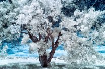 How to Expose When Shooting Infrared