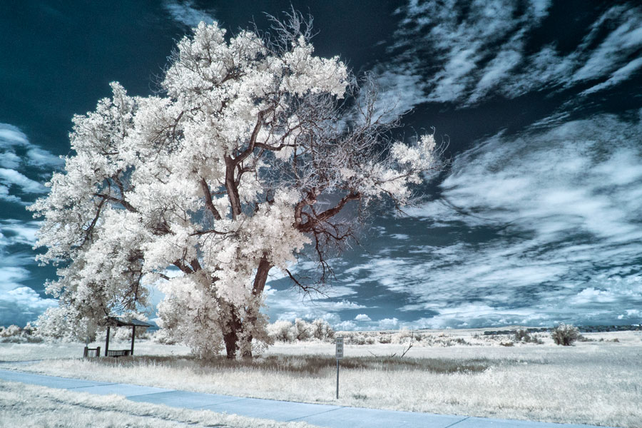 Infrared Camera Conversions: What's the Best Option?