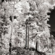 Shooting Landscapes in Infrared