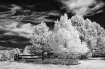 Exploring Infrared Photography