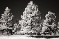 Exploding Some Myths About Infrared Photography