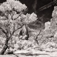 Photographing Zion National Park in Infrared