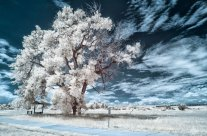 Infrared Photography in the Movies