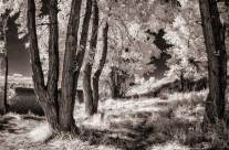 Infrared Photography in Your Own Backyard