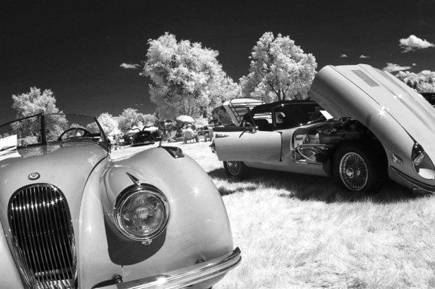 Jaguars in Infrared