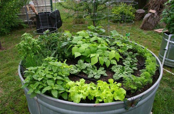 Tub Gardening Vegetables