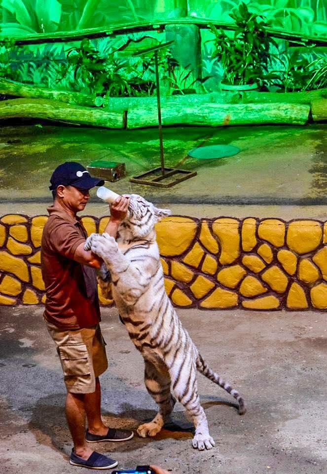 Zoobic Tiger 2.jpg