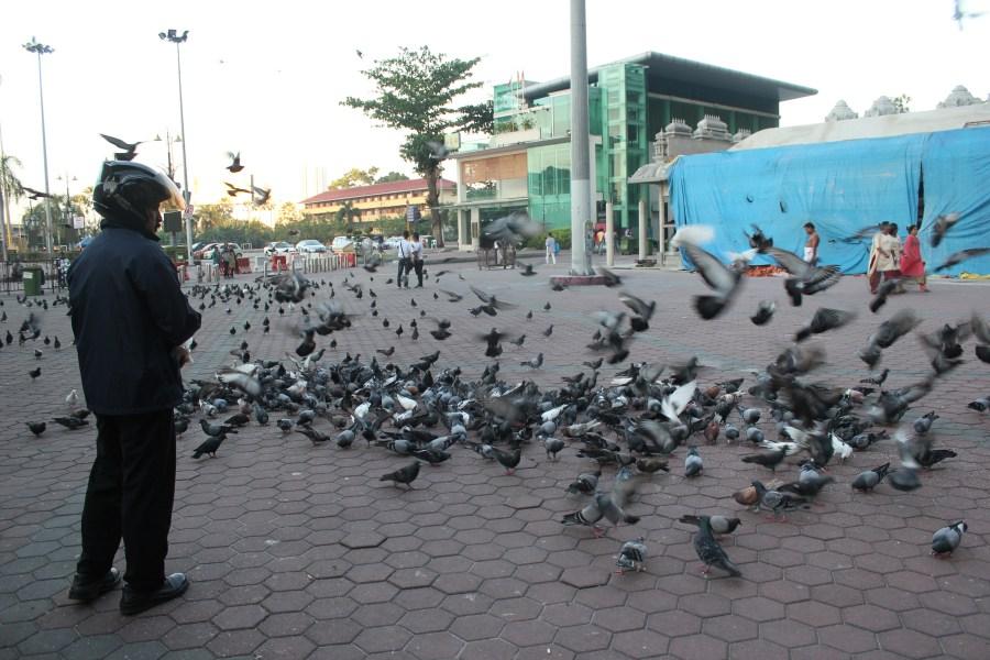 Huge flock of pigeons in Batu Caves