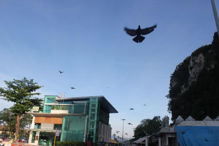 IMG_8835Huge flock of pigeons in Batu Caves