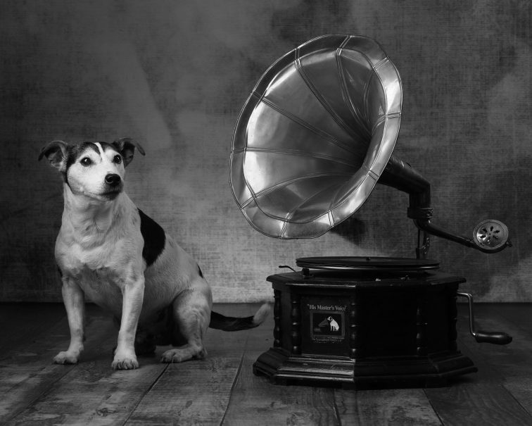 Toby with a gramophone