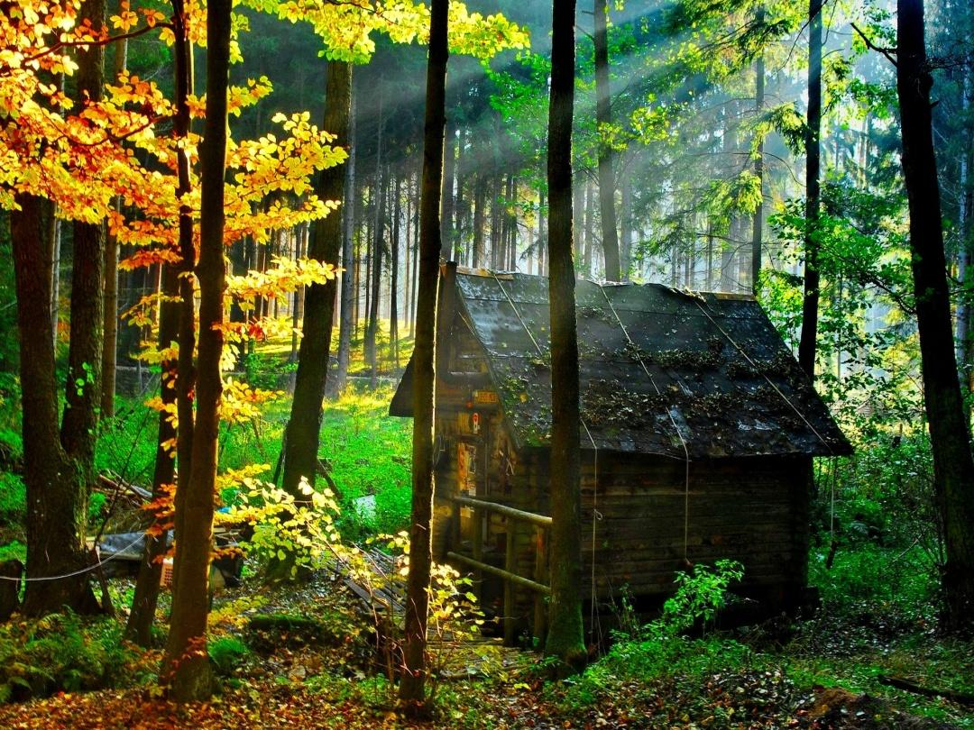 wooden-house-in-forest