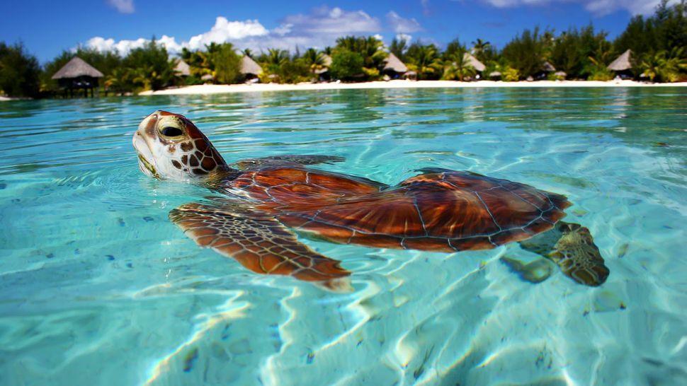 001598-08-turtle