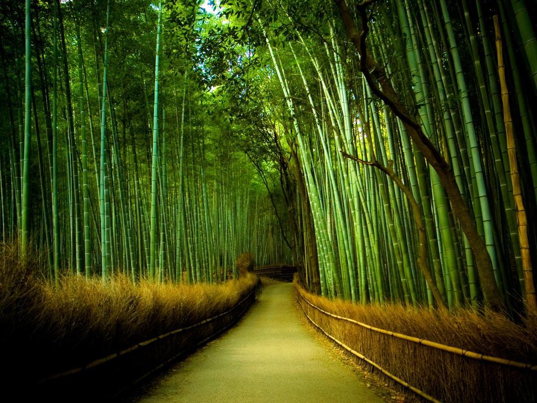 bambus_garden-kyoto