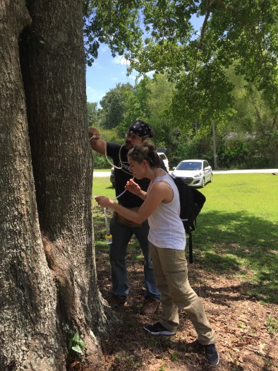 Joe MacGown and Antonette Walford aspirating Tawny crazy ants and Dark Rover ants off a tree in Mobile Co., AL