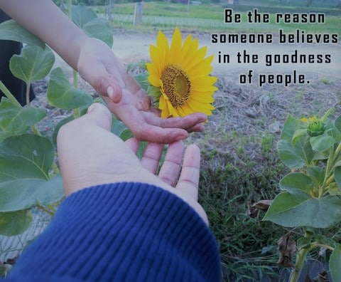 Inspirational quote - Be the reason someone believes in the goodness of people. With two human hands touch sunflower blossom in field background. One dirt hand and a helping hand concept holding sunflower.