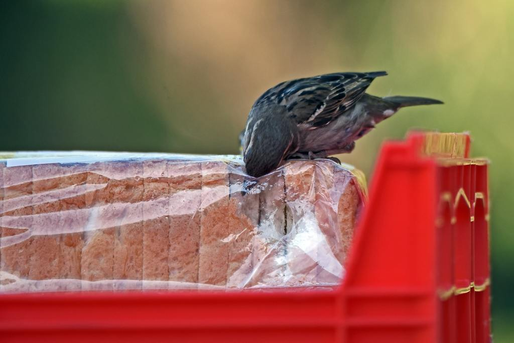 bird opening slice bread pack