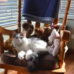 cat on rocking armchair