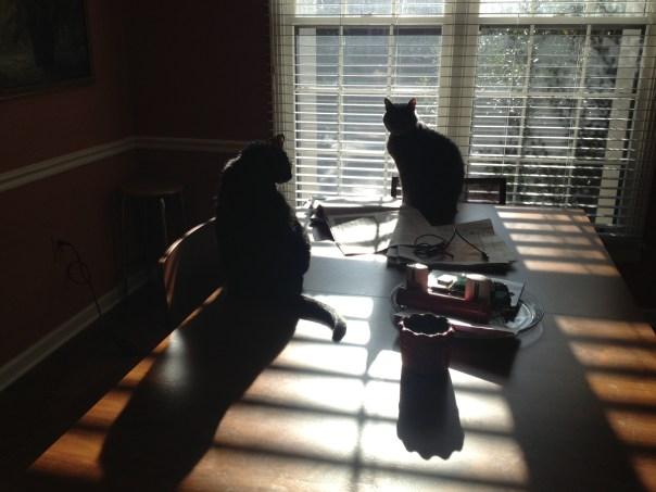 Table Shadows
