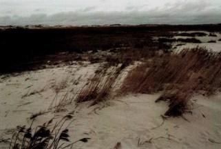 Sandgewächse © Kruth 2015