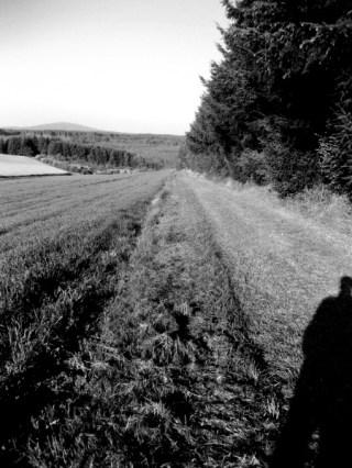 Waldrand © Kruth 2014