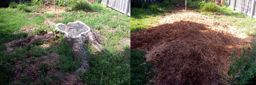 Joes Tree Service stump removal no cleanup