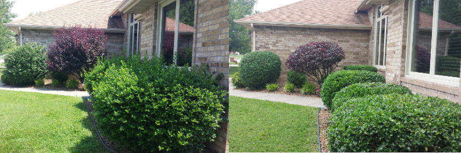 bush trimming before and after
