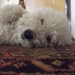Bad, Stinky Dog: Homeopathy Fixes It