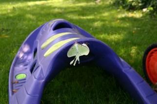 A4-Luna Moths