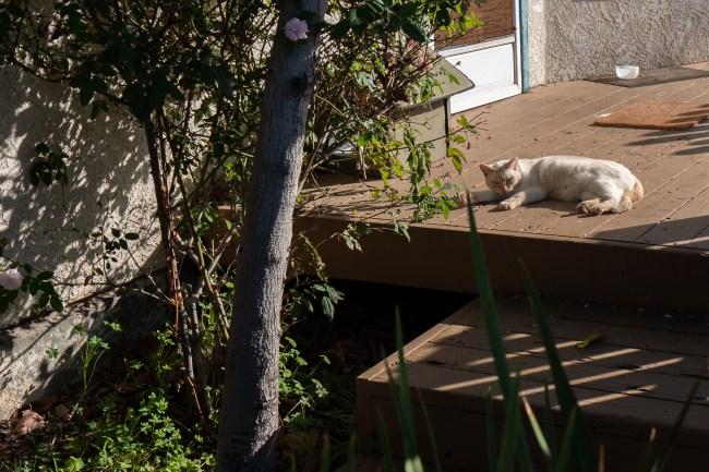 Comfy Cat Looks
