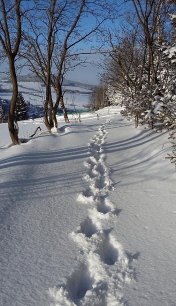 Snow pic 1