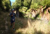 Beautiful tree ferns lining the track.