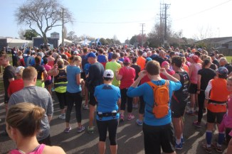 Some 300+ participants in the half marathon run and walk.
