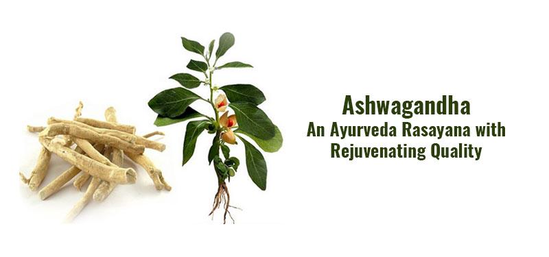 अश्वगंधा – कायाकल्प करने वाला आयुर्वेद का एक रसायन (Ashwagandha – An Ayurveda Rasayana with Rejuvenating Quality)