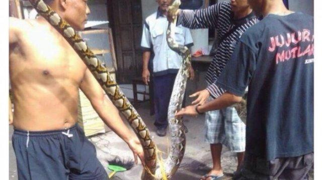 ular piton di kandang burung 20180125 144431 1