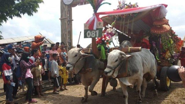 meriahkan festival gerobak sapi diy ratusan bajingan dan gerobak sapi padati lapangan pokoh 20181021 111219