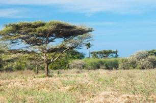 Pohon Kanopi