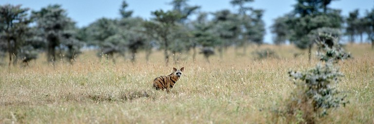 Read more about the article The mammals of northern Kenya