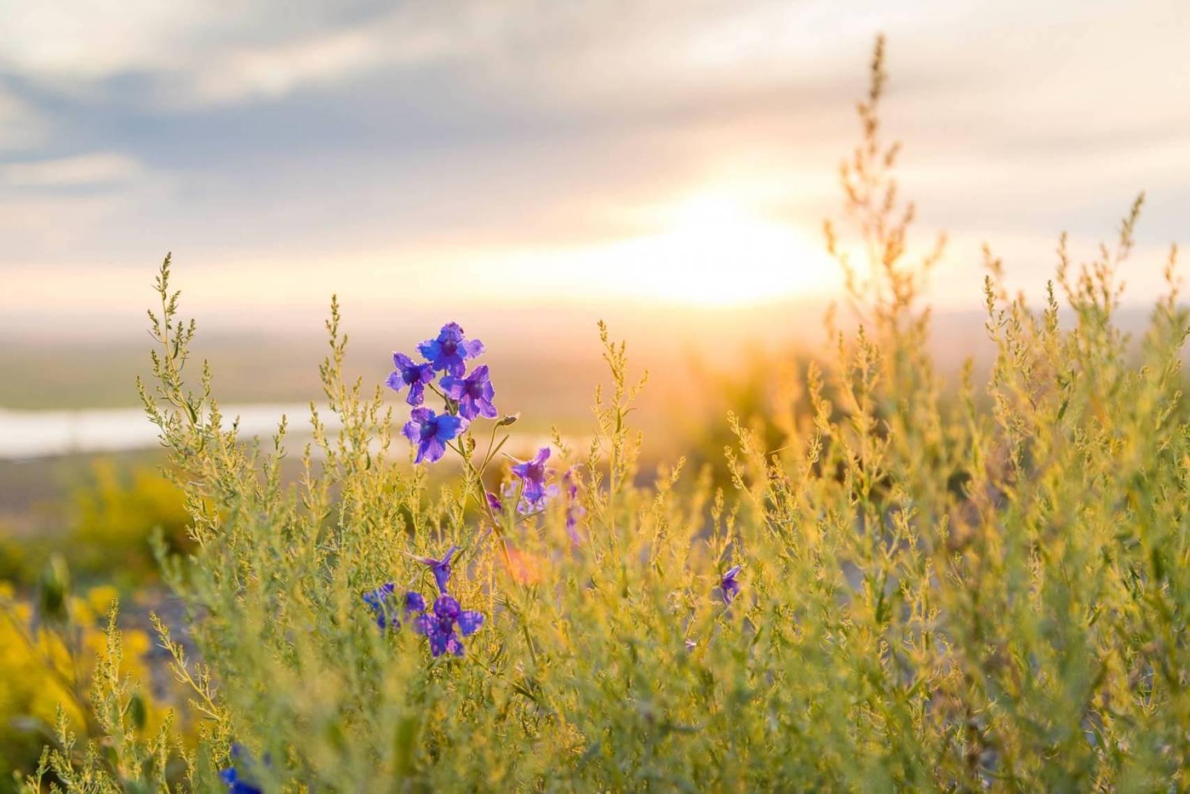 wildflower-918934_1920