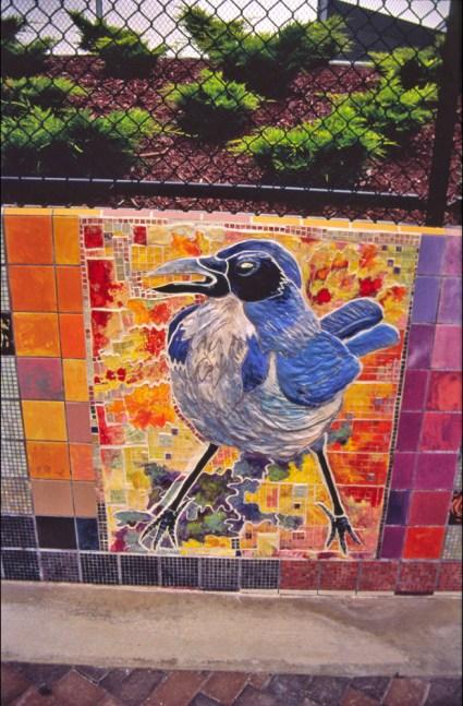 Ted-Fairfield-Park_Birdwatch-2