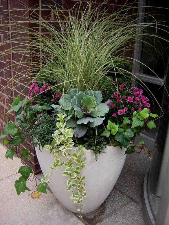 colorful curb appeal for fall grasses