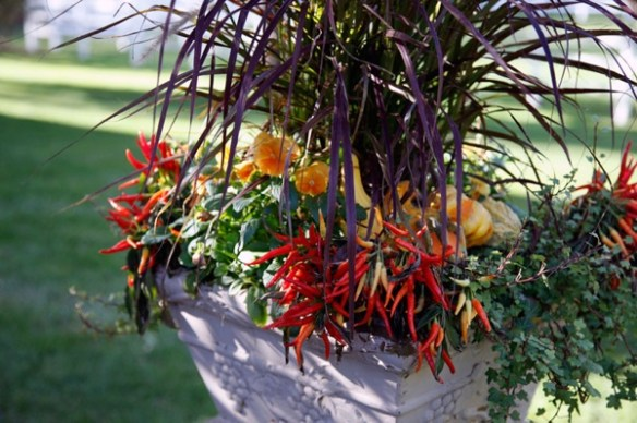 colorful curb appeal for fall peppers