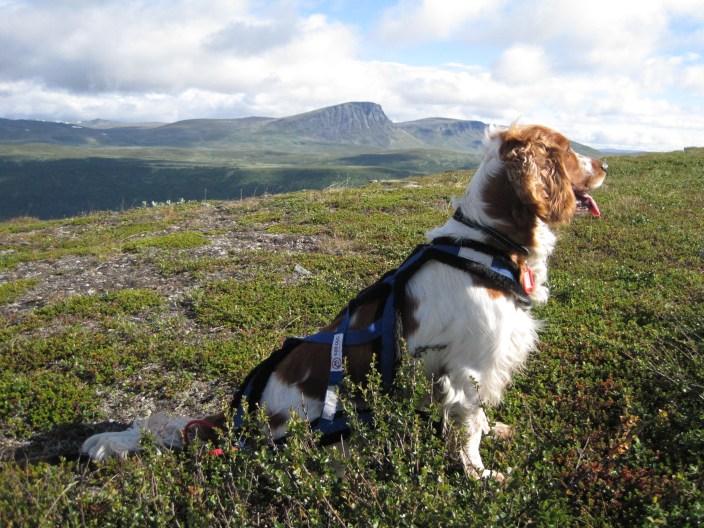 Om att fjällvandra med hund - packlista