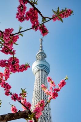 Auswahl bearbeitet Japan 5D (502 von 733)-2