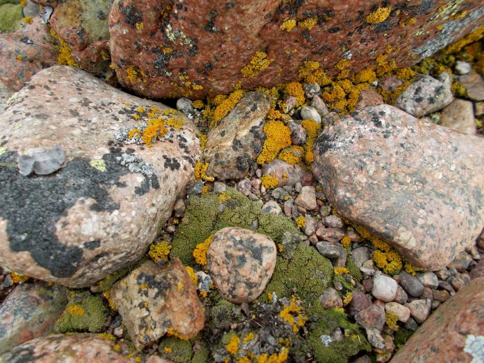Colourful lichens on the top of the esker