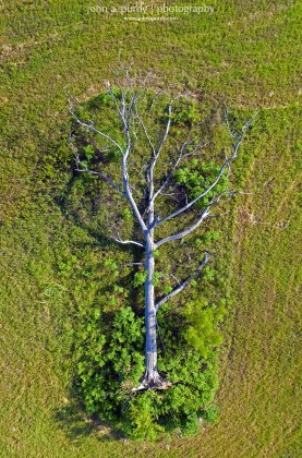 Drone-Fallen_Tree-From_Above